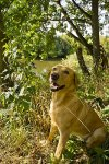 Hund_an_Saale